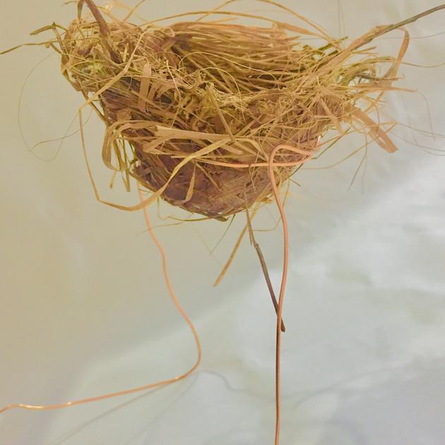 Participant's nest 5