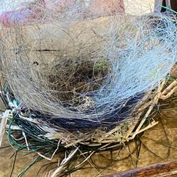 Participant's nest 8
