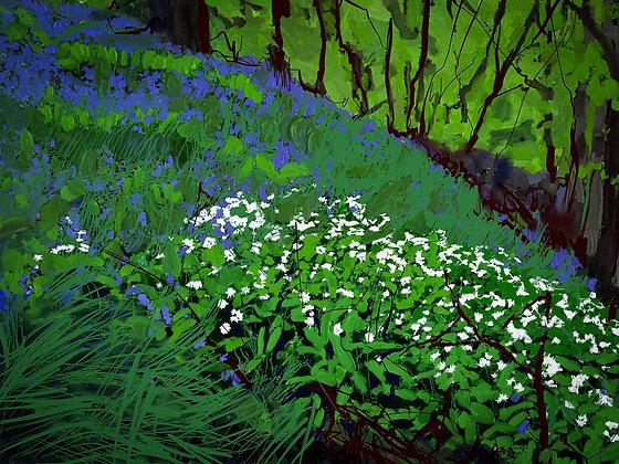 Bluebells and Wild Garlic, Howick Gardens, Northumberland