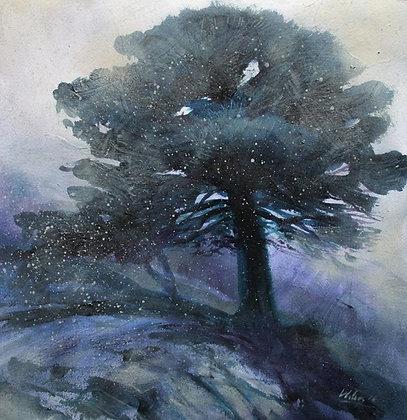 Scots Pine in falling Snow, Glen Affric