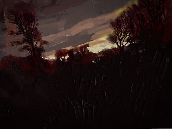 Mid Winter Trees Swansfield, Alnwick, Northumberland