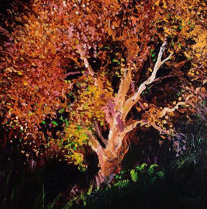 Autumn Tree Howick Northumberland