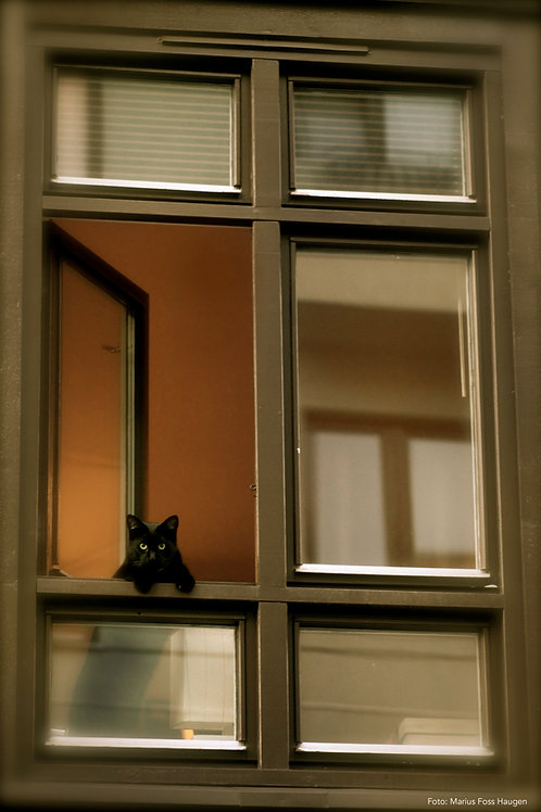 Katteblikket (Nr 18)