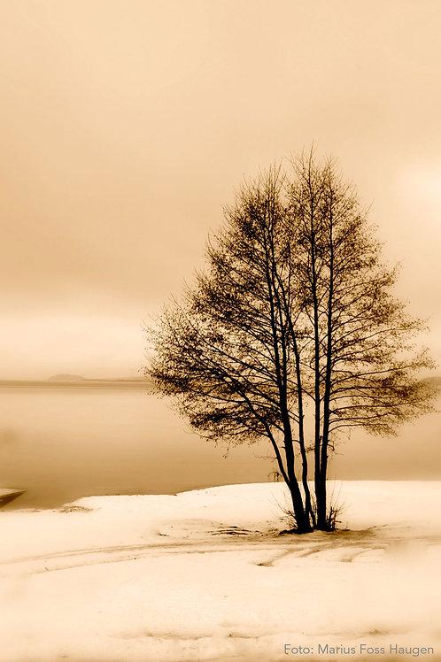 Vintertre (Nr 22)