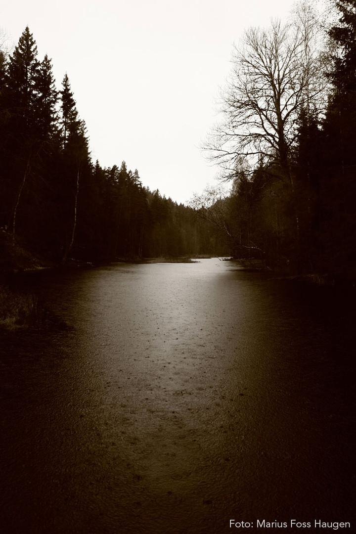 Våt skog