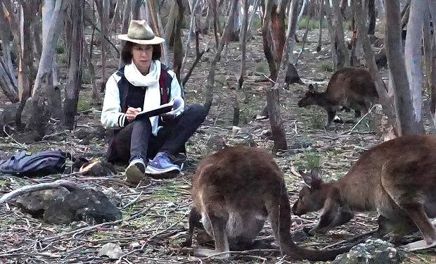 kangaroos_modifié.jpg