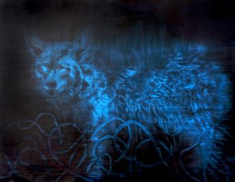 A Secret Life of Animals Blue Wolf