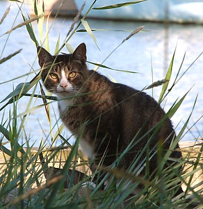110820 107 Rocky Neck Cat.jpg