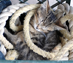 Copy of 070615 Julingtons nap in the ropes.jpg