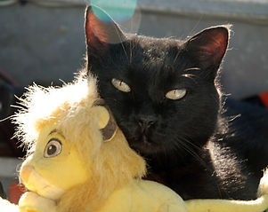 110710 099 Sweet Penny and Lion king - Copy.jpg