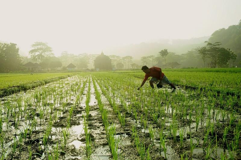 contract farming reforms
