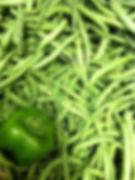 green beans and pepper from garden