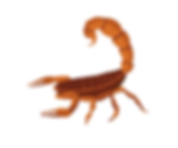Emerald Coast Scorpions.png