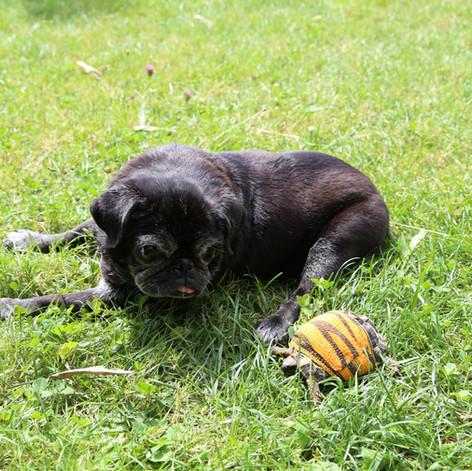 Zenti zu Besuch im Mopsgarten