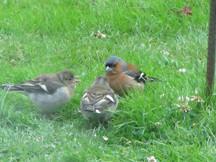 Flo singing and birds 063.JPG
