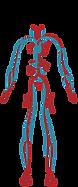 angiologia, cirurgia vascular, varizes, varicoses, angiologista, cirurgiao vascular, Curitiba, Unimed, Amil, Bradesco, Petrobras, Fundação Sanepar, Fundação Copel