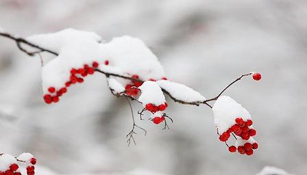 WinterBranch.jpg