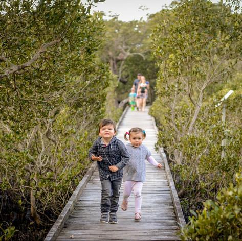 Mangrove Board Walk