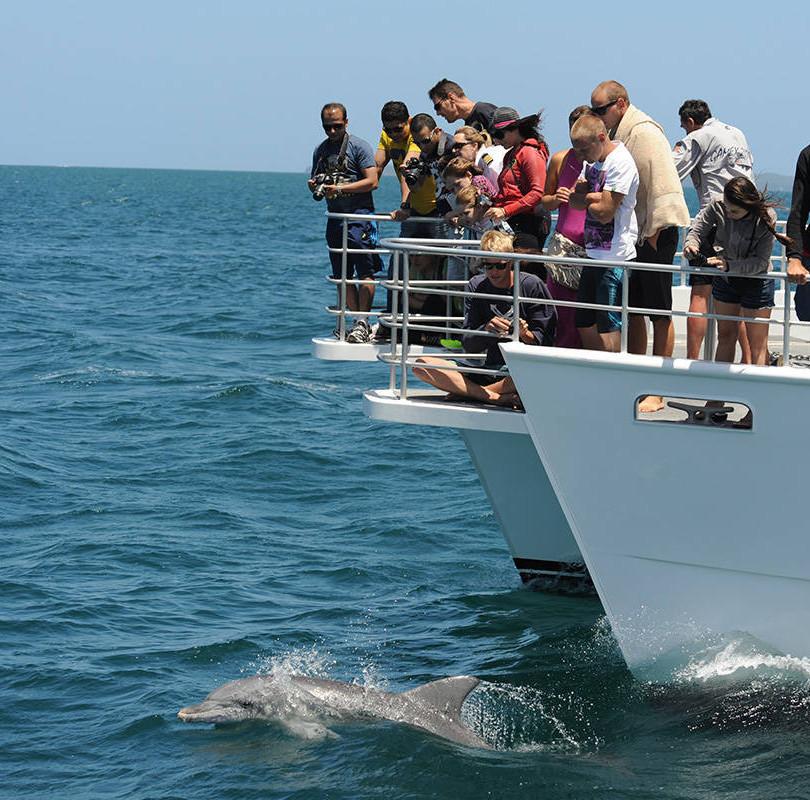 dolphin-vessel.jpg