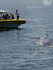 humpack-whales-in-jervis.jpg