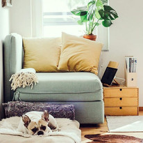 Home is where your pet is... but if you'