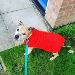 """""""Kelly used to struggle to give us attention out on walks, now thanks to a few tips from Laura, her walks are so much more engaging for all of us."""""""