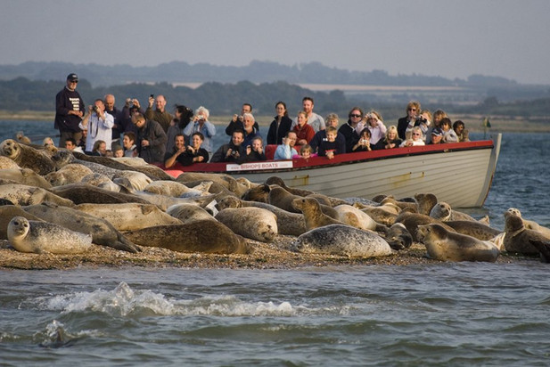 Morston Seal Trips