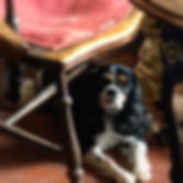 dog-friendly-pub.jpg