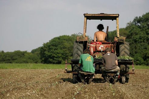 Alex on the tractor.jpg