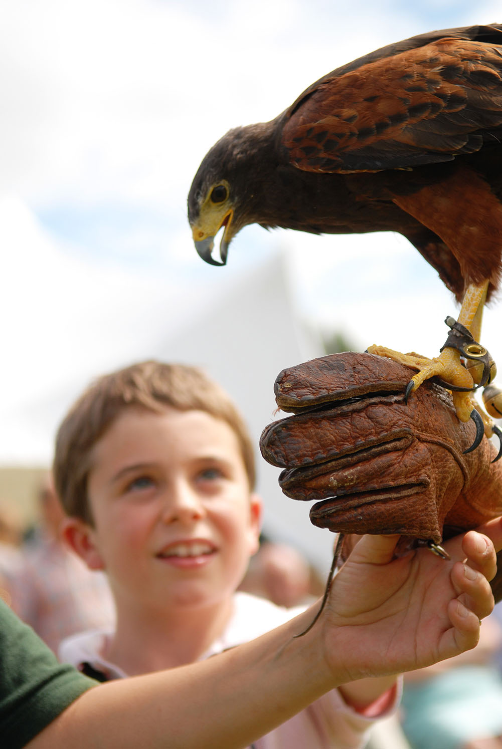 Falconry purton house