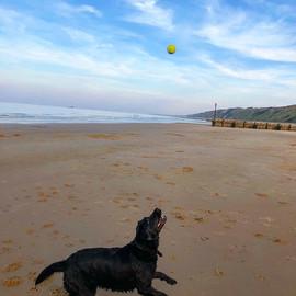 dogs of norfolk beach house