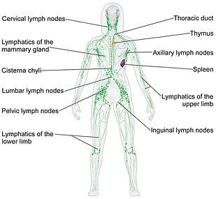 lymph-overview.jpg