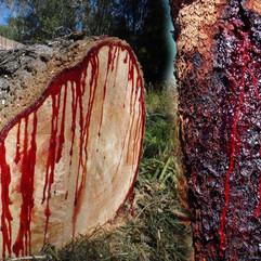 blood-tree_1474002815.jpeg