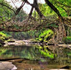 Living-root-bridge-8.jpg