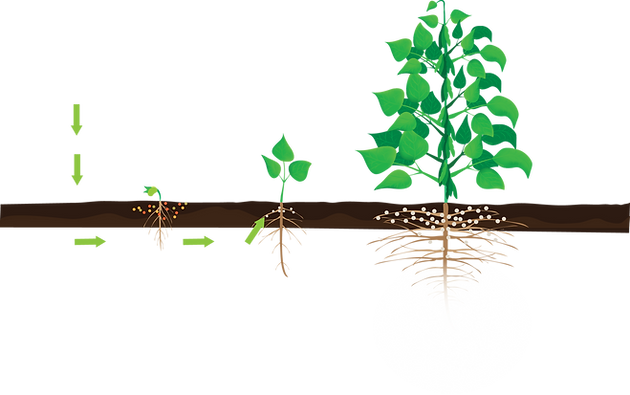 benefits of inoculation nitrogen fixation process