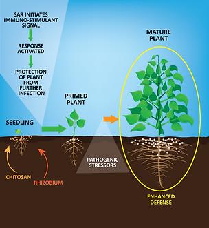 Dirt.Sky.Plant-SAR101.png