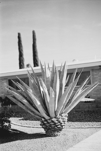 Kate Edmonson Tucson AZ front yard.jpg