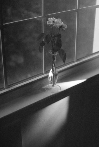 Dad flower.jpg