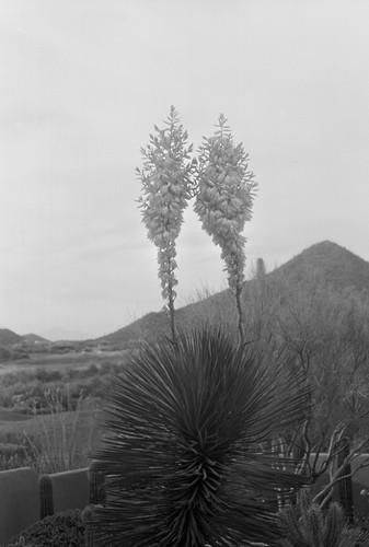 Kate Edmonson Tucson Backyard1.jpg