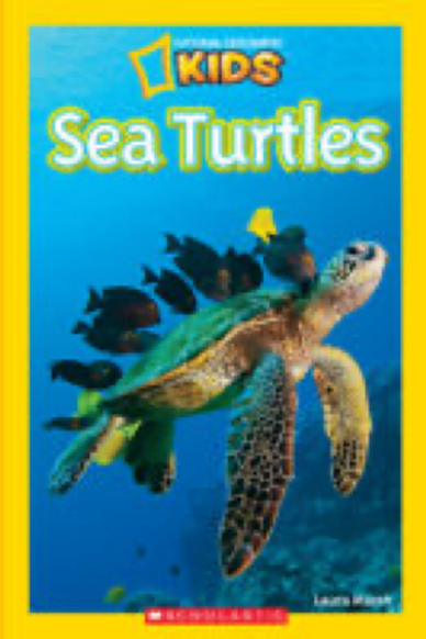 National Geographic Kids Readers: Sea Turtles            Laura Marsh