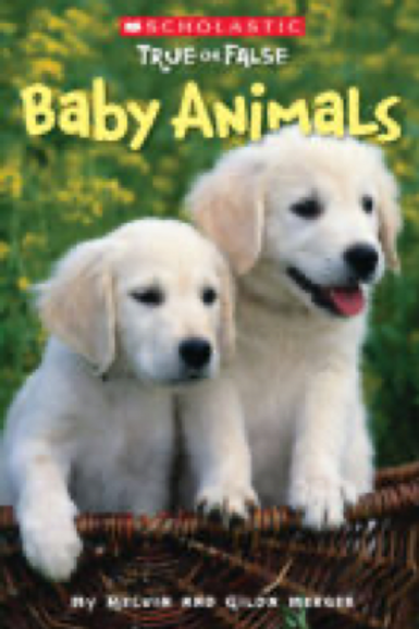 True or False: Baby Animals              Scholastic