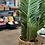 Thumbnail: עציץ דקל מלאכותי
