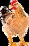 Chicken-coop-free.png
