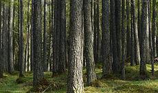 larch-forest-358064_1920.jpg