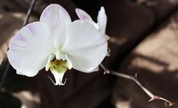 photo-dslr-orchid