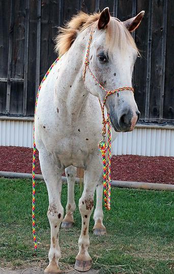 rope tack, rope halter, custom rope halter, custom rope tack