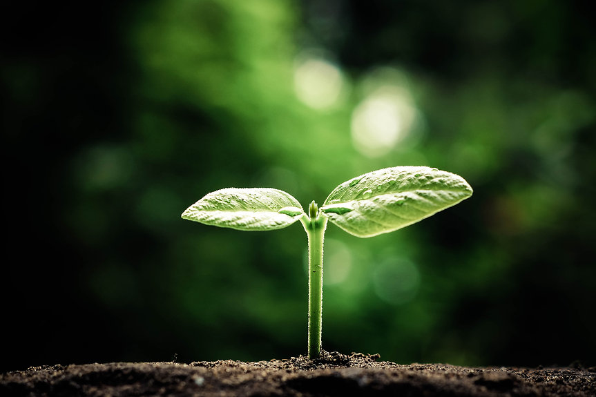 Grow Culture Team Development