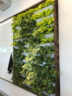 Google complex Green wall.JPG