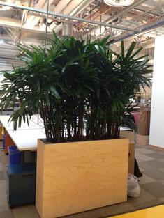 FB planter box with Rhapis.JPG