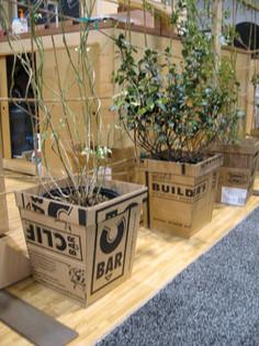 Clif Bar Cardboard planter2.JPG
